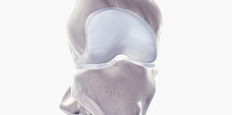 representação da cartilagem que recobre as extremidades dos ossos do joelho