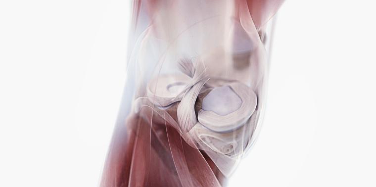 lesão do joelho no ligamento cruzado anterior